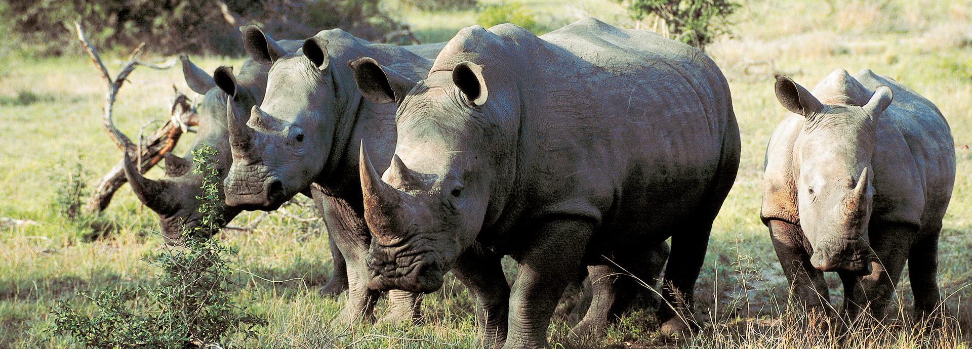 south-africa-safari-slide07